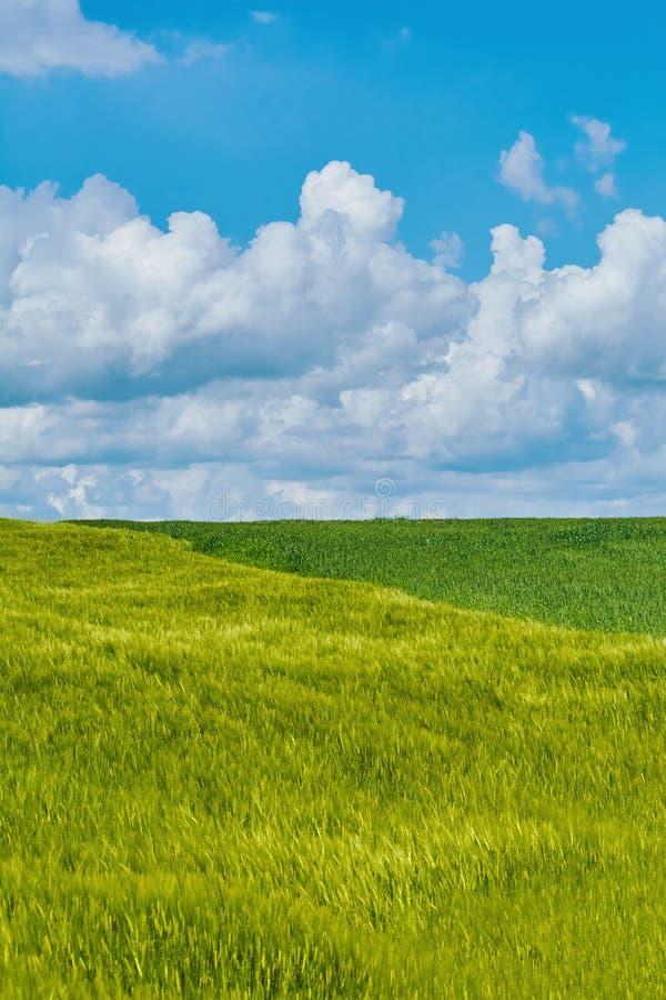 field green royaltyfria bilder
