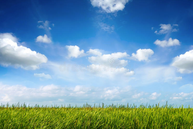 Field of green fresh grass under blue sky. Field of green fresh grass under blue cloudy sky royalty free stock image