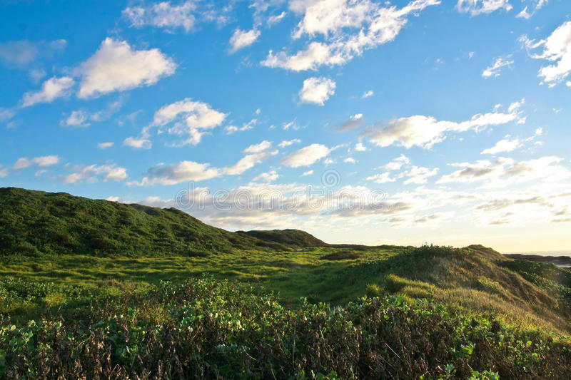 Download Field Of Green Grass And Blue Sky Stock Image - Image: 25701913