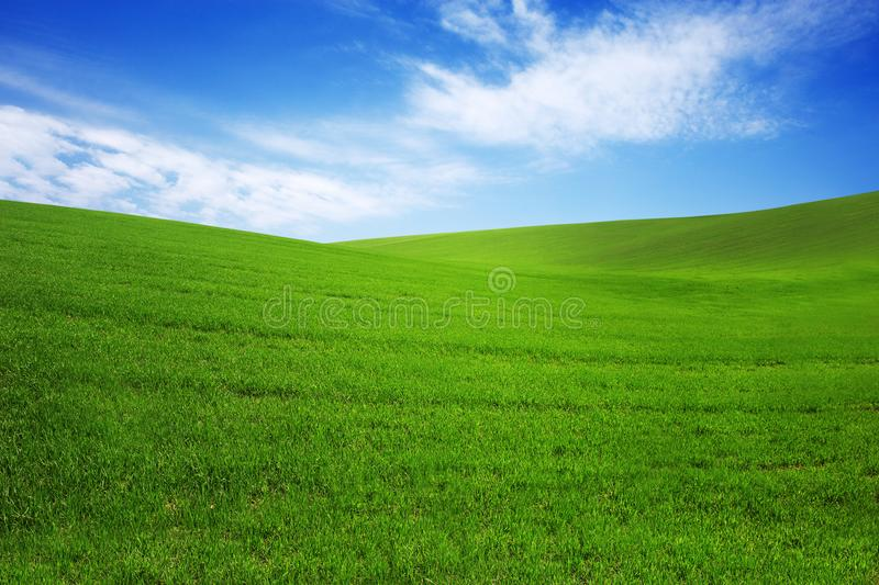 Field with green grass and blue sky with clouds on the farm in beautiful summer sunny day. Clean, idyllic, landscape with sun. royalty free stock photo