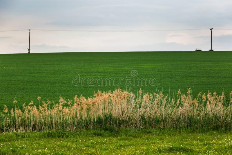 Field of green grass and horizont. Czech Republic stock photo