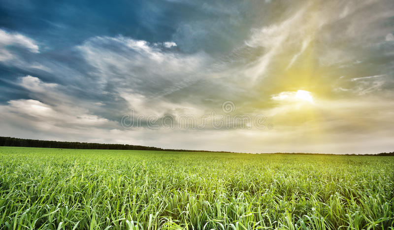 Field of green grass and sky. Background stock photo