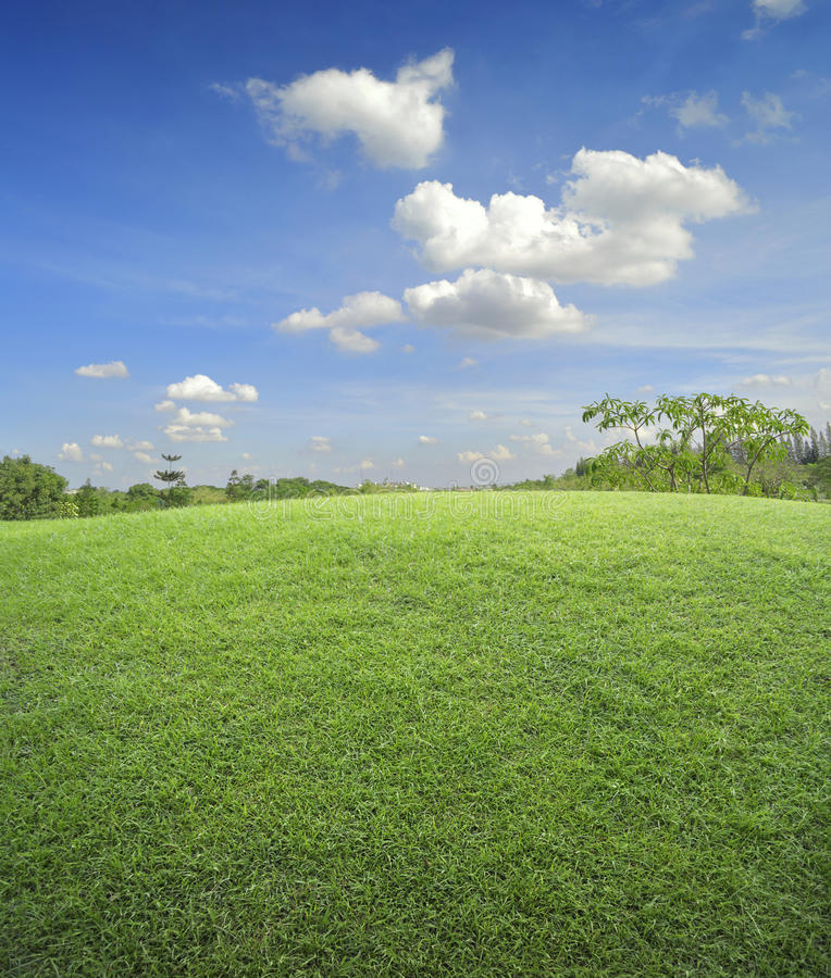 Field of green grass and sky. For background stock photo