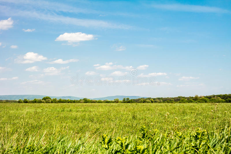 Field of green grass and sky. Background with cloudy sky and grass royalty free stock photos