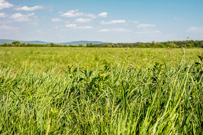 Field of green grass and sky. Background with cloudy sky and grass stock photos