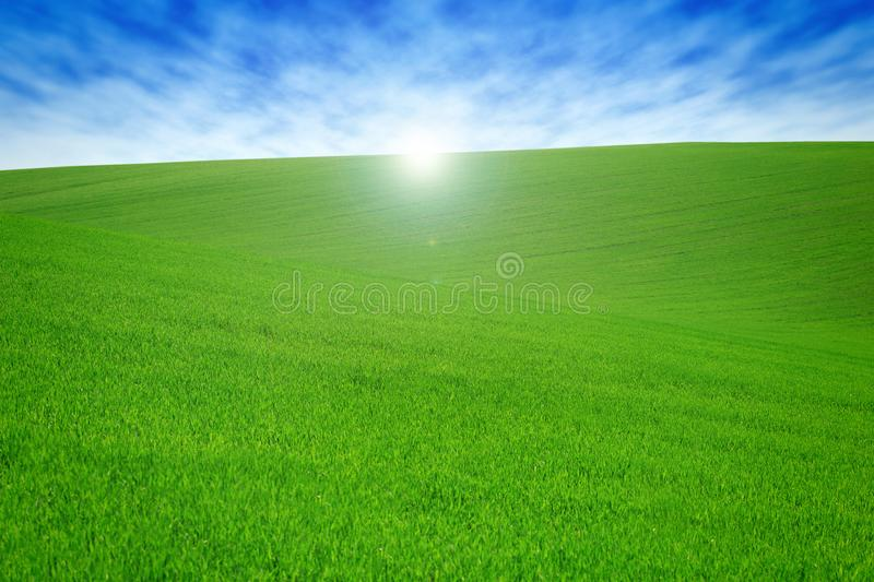 Field with green grass and sky with clouds. Clean, idyllic, beautiful summer landscape with sun. Field with green grass and sky with clouds. Clean, idyllic royalty free stock photo