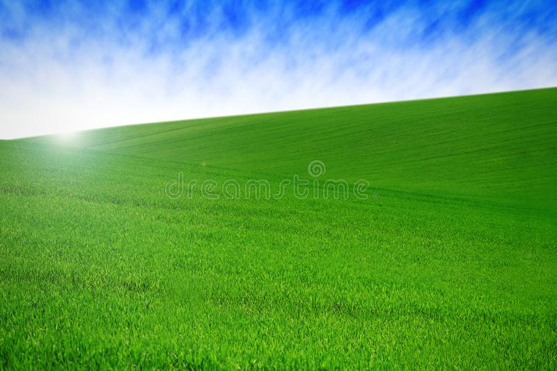 Field with green grass and sky with clouds. Clean, idyllic, beautiful summer landscape with sun. Field with green grass and sky with clouds. Clean, idyllic stock photography