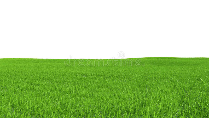 Field With Green Grass On A White Background Stock Illustration
