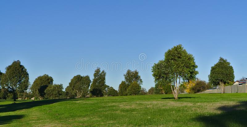 Field of green lush grass. With several trees during daytime with blue sky stock photo
