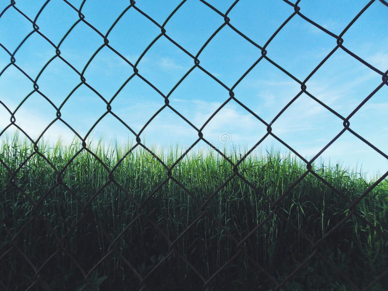 Field in grid royalty free stock image
