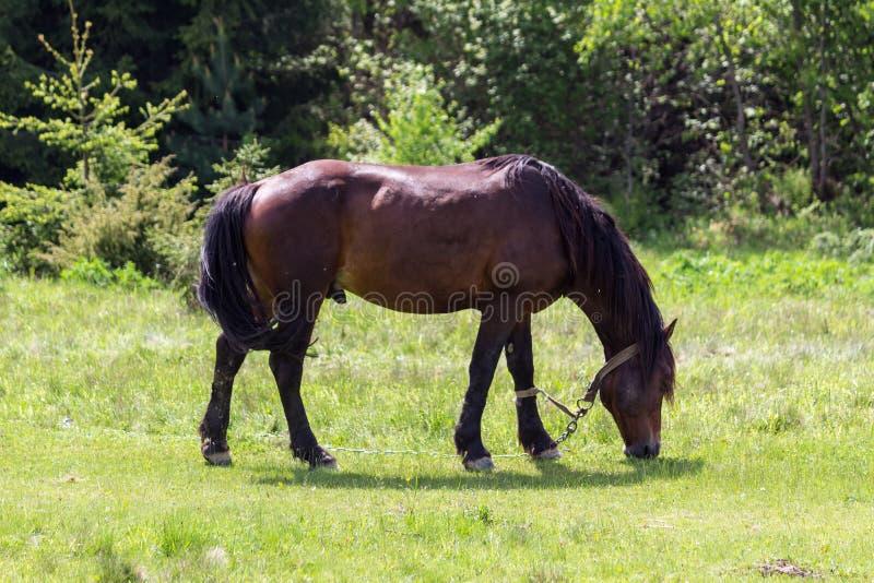 field h?sten royaltyfri foto