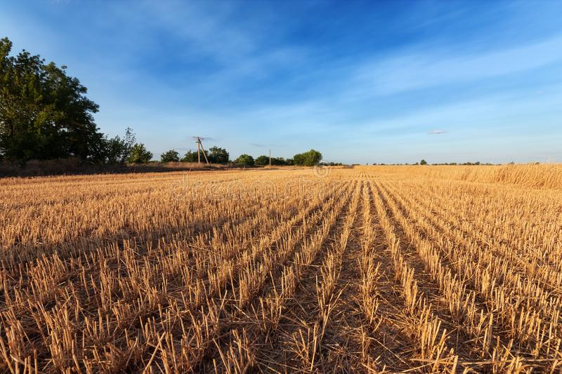 Field after harvest. / bright summer photo of the field of Ukraine royalty free stock photos