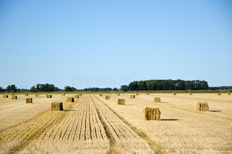 Field of harvest lines royalty free stock image