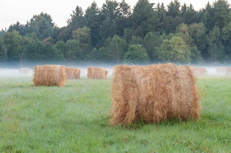 Field With Hay Bales Stock Photos