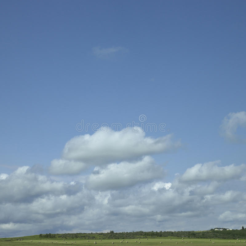 Download Field Of Hay Stock Images - Image: 30788874