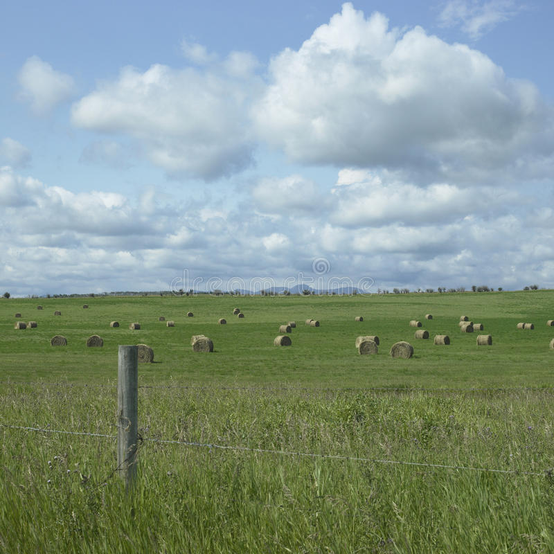Download Field of hay stock image. Image of beauty, harvest, country - 30789251