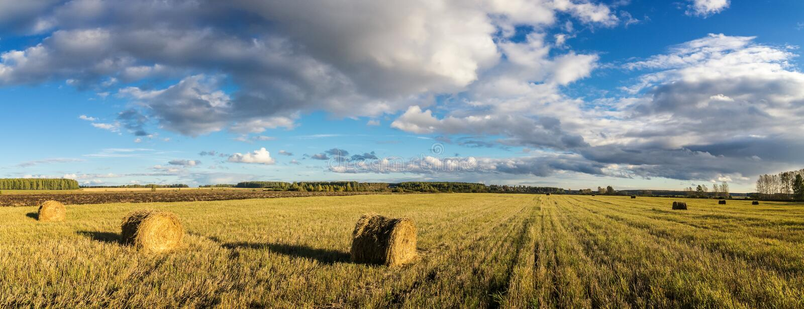 Field, hay, harvest, farm, rural, stack, straw, grass, autumn, earth, September, August, summer, farm, village, industry, agricult stock image