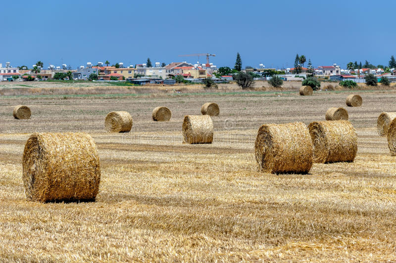 Field with haystacks stock photo