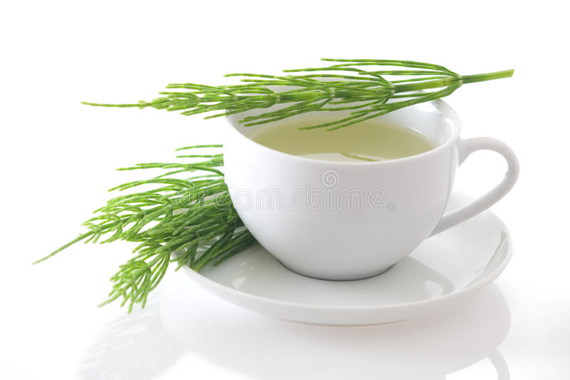 Field horsetail (Equisetum arvense) tea isolated stock images