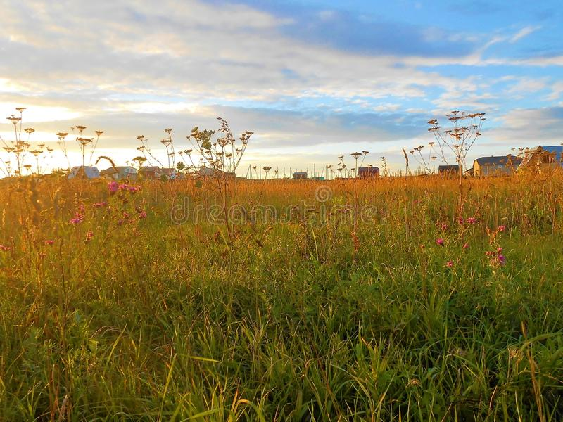 Field with houses in summer on the sunset. Field with houses in the end of summer on the sunset with many steams of the plants and flowers. Sky with long white stock image