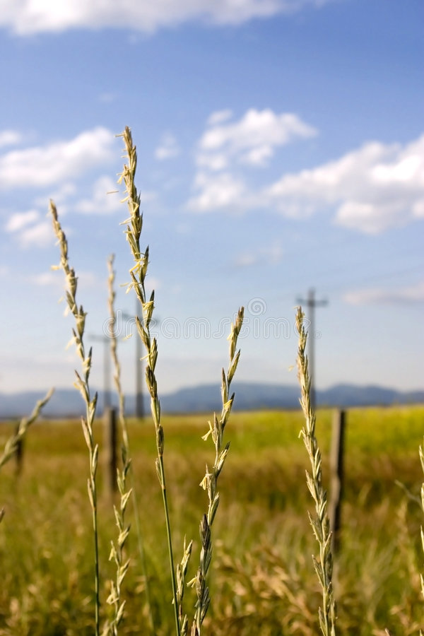 Free Field In Helena With Focus On The Weeds (DOF) Royalty Free Stock Image - 953786