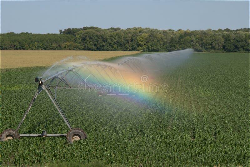 Field irrigation artificial rain plant water stock photo