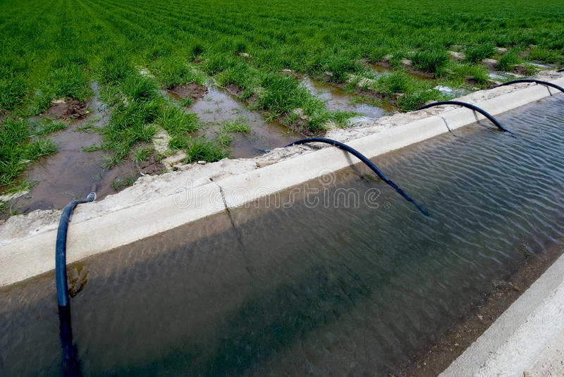Field Irrigation Ditch. Irrigation ditch nourishes farm field crops royalty free stock image