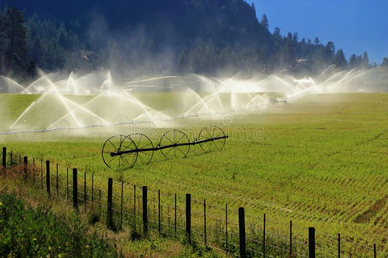 Field Irrigation in Morning Light. Early morning sunlight shines on the spray of a field irrigation system in the lower Nicola Valley between Merrit and Spence`s stock photo
