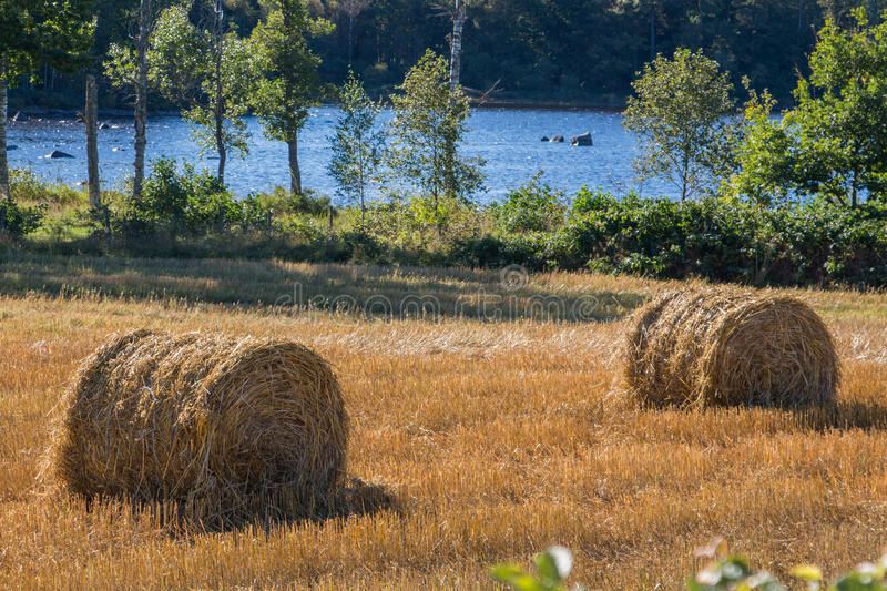 Field by a lake stock photo