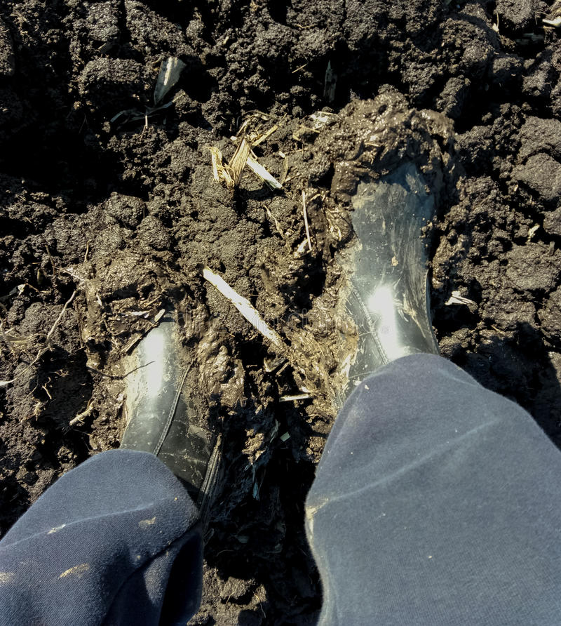 field land boots in a swamp legs stock image