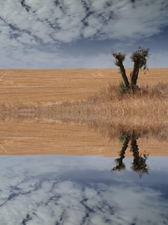 Download Field landscape stock photo. Image of reflex, pattern - 2306692