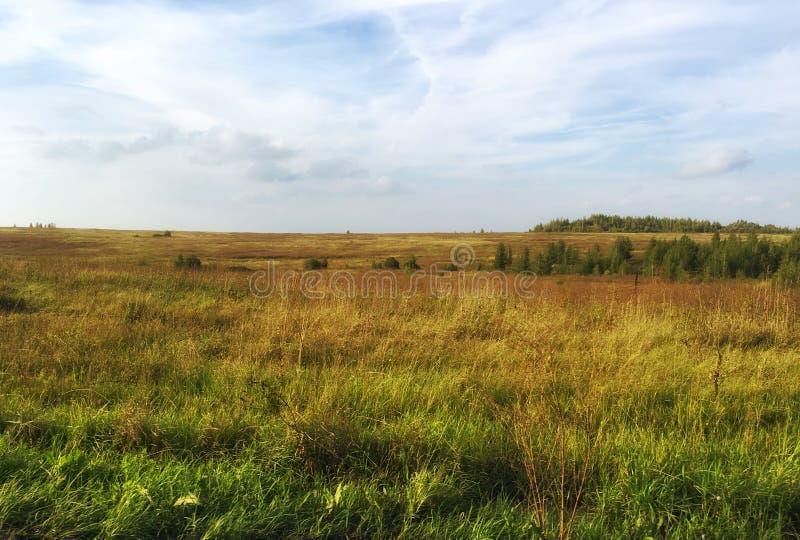 Field landscape in summer. Field landscape summer grass nature stock image