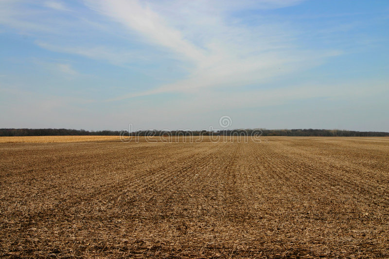 Field in Late Winter royalty free stock photo