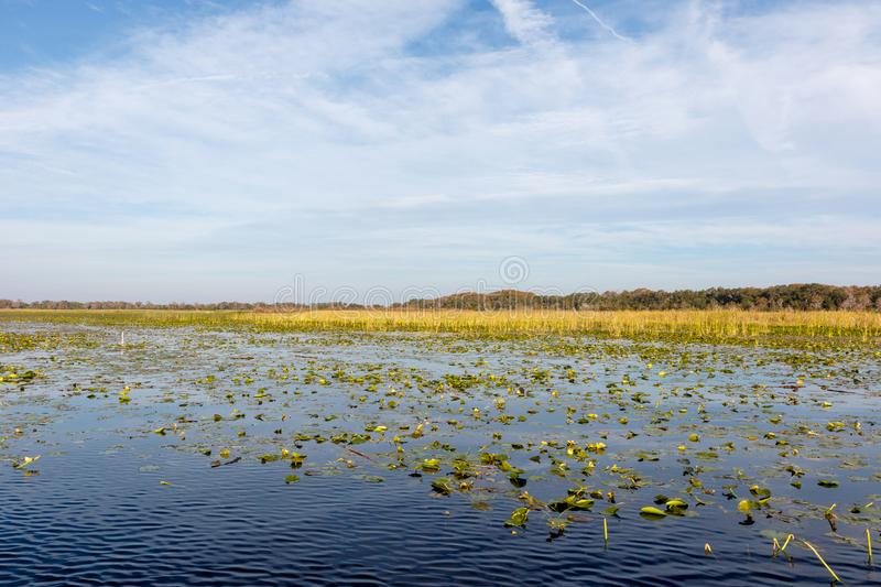 Lake Toho, near Orlando, Florida. Field of lily pads on the calm, blue water of Lake Toho near Orlando, Florida, a popular large mouth bass fishing destination stock photography