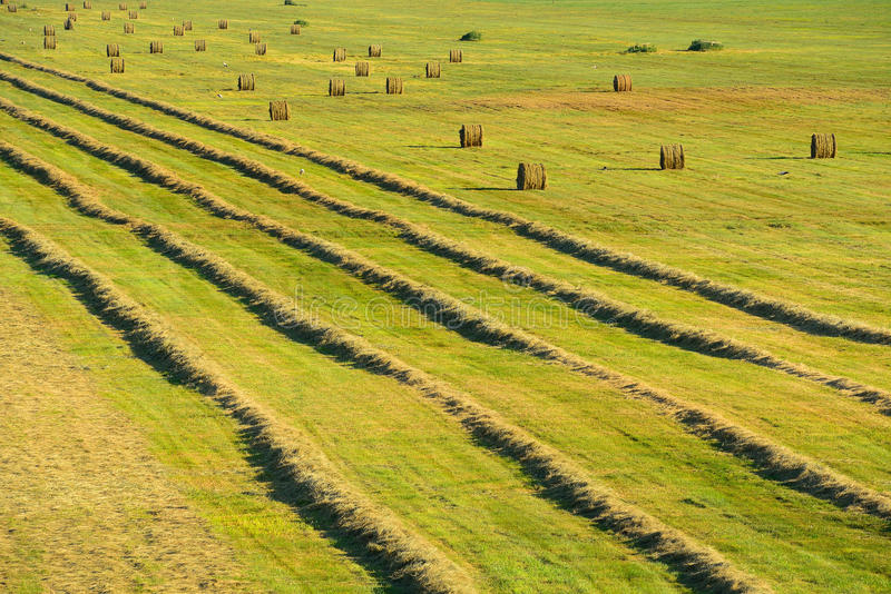 Field with lines of drying straw and round stacks of beveled wheat royalty free stock image