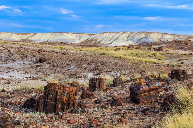 Field littered with petrified wood; hills in background royalty free stock photography
