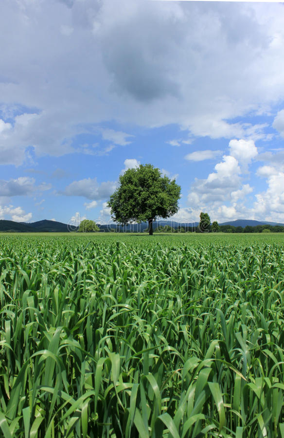 Field 7242 royalty free stock photography