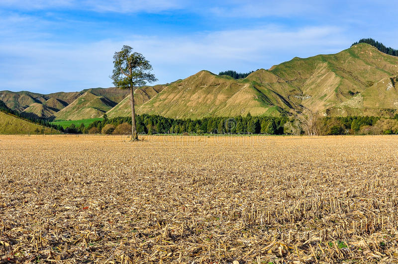 Field with lonely tree in Whanganui National Park, New Zealand royalty free stock photos