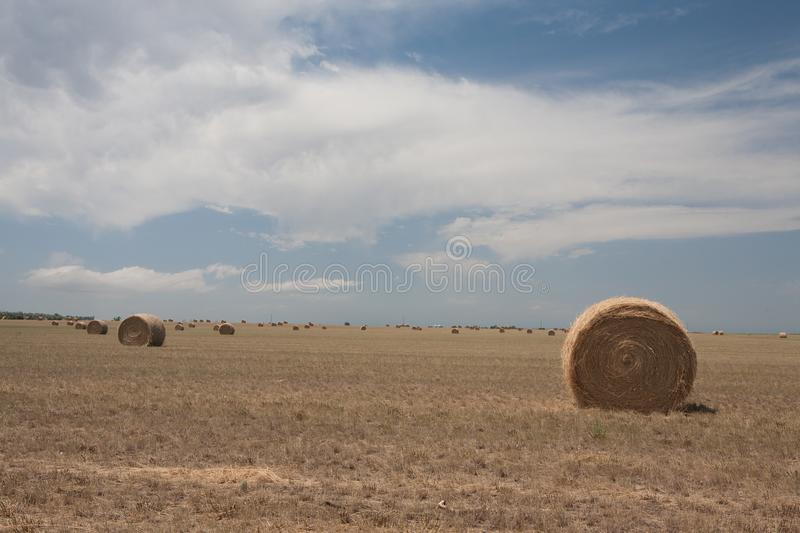 Field with many hay rolls. royalty free stock images