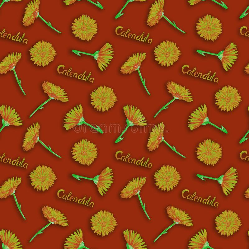 Field marigold Calendula arvensis flowers, hand painted watercolor illustration with inscription, seamless pattern design. On dark red background stock photos