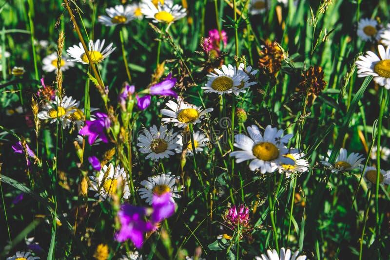 Field meadow stock image