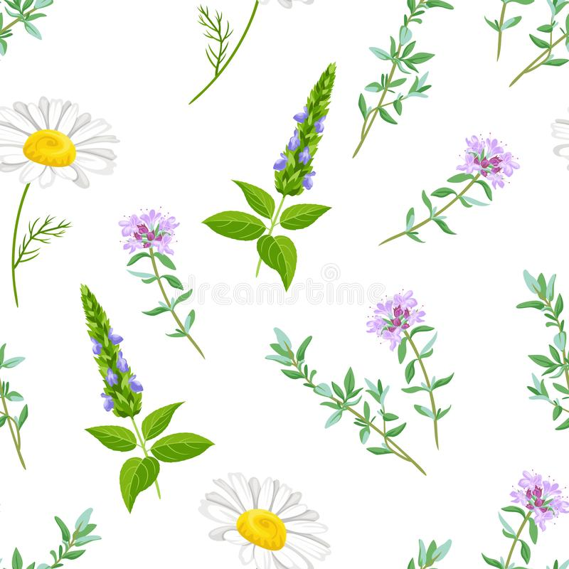 Field medicinal herbs and flowers seamless pattern. stock illustration