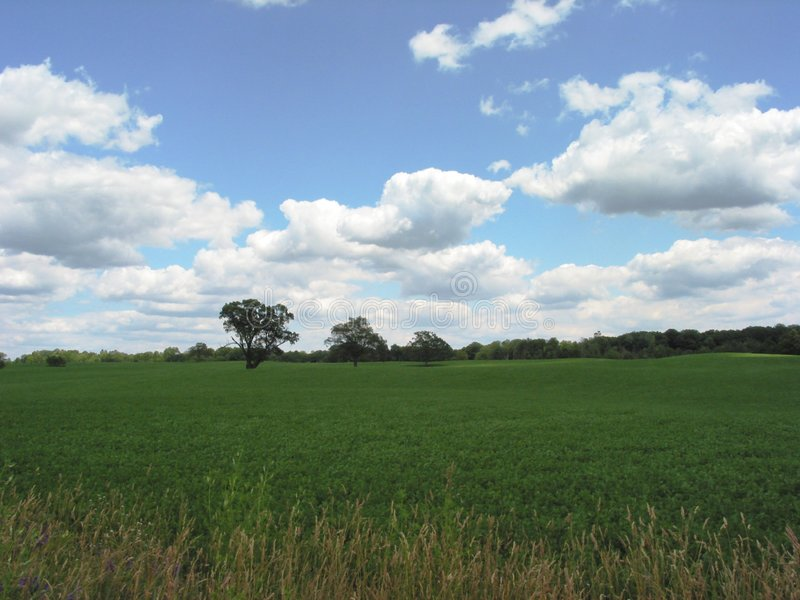 Download Field in Michigan – 1 stock image. Image of green, grass - 9453