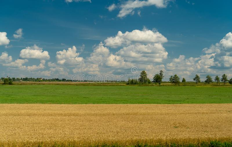 Field of mowed cereals stock photo