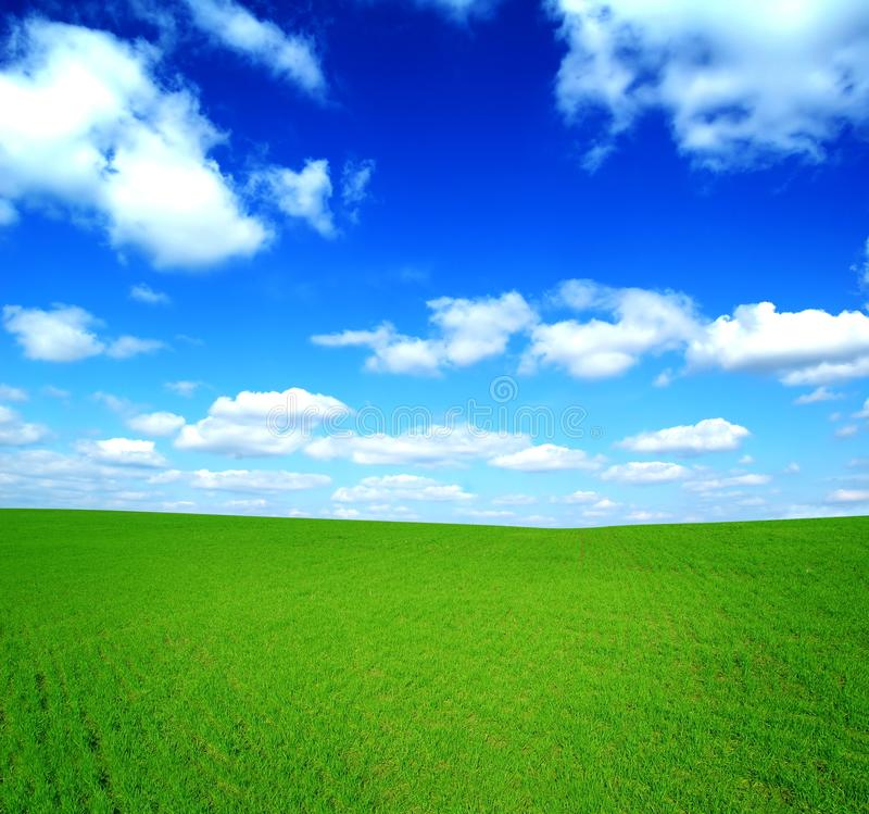 Free Field Of Green Grass And Blue Sky Stock Photography - 13416662