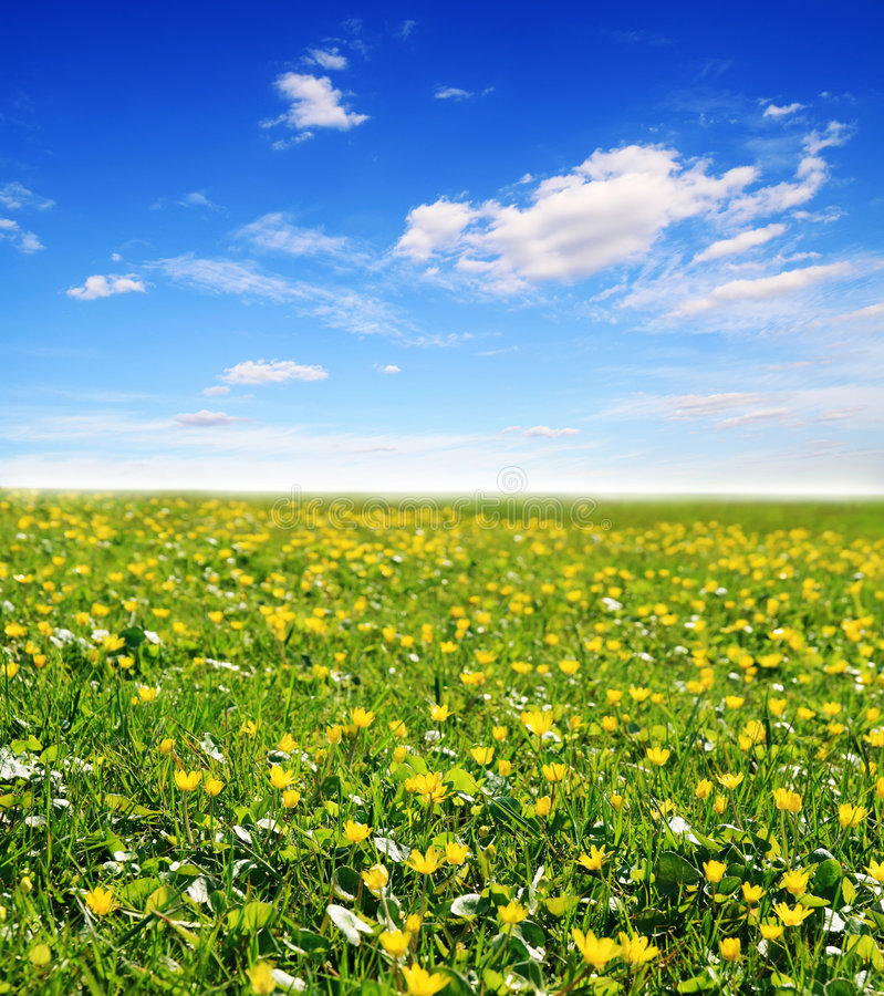 Free Field Of Yellow Flowers And Sun Sky Royalty Free Stock Photo - 9045225