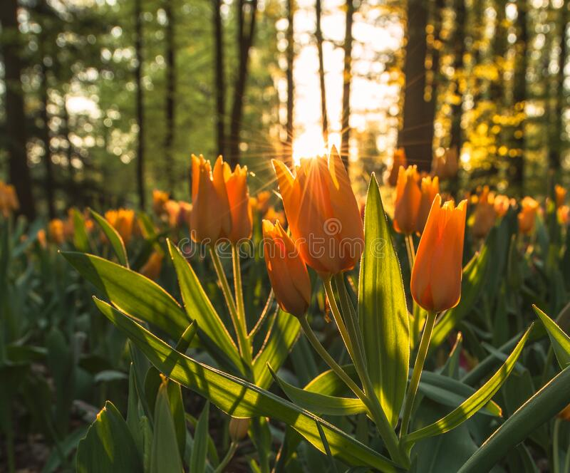 Field Of Orange Flowers Free Public Domain Cc0 Image