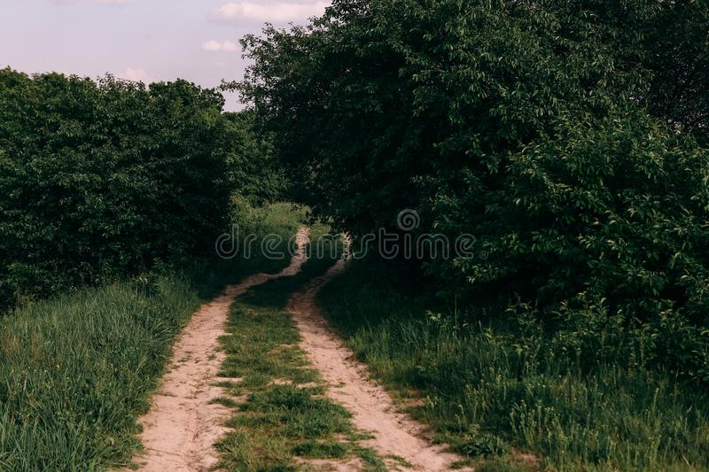 field overgrown grass winding dirt road sunny day stock photo