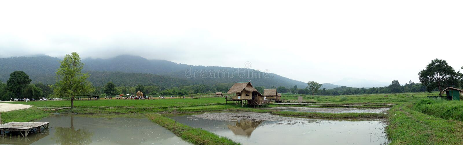 Field, paddy field, The countryside of rural Thailand royalty free stock photos