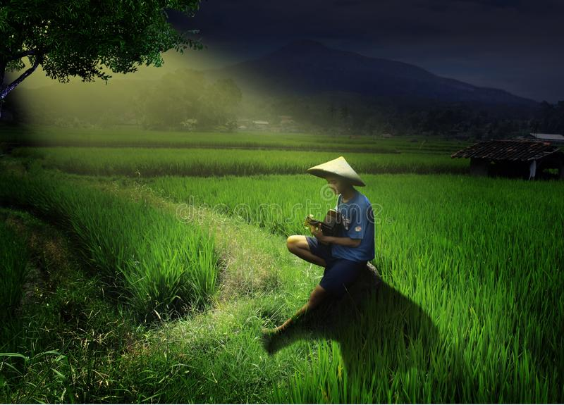 Field, Paddy Field, Agriculture, Grass Free Public Domain Cc0 Image